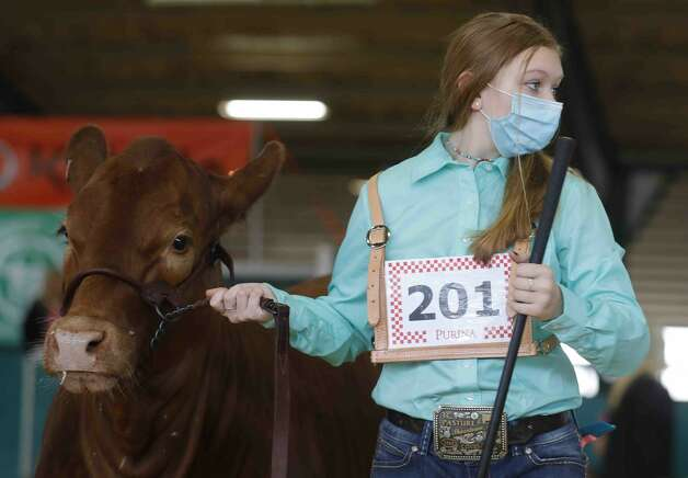 Brooke Carr of Champion 4-H shows her heifer during the replacement heifer show at the Montgomery County Fair & Rodeo, Thursday, April 15, 2021, in Conroe. Photo: Jason Fochtman/Staff Photographer / 2021 © Houston Chronicle