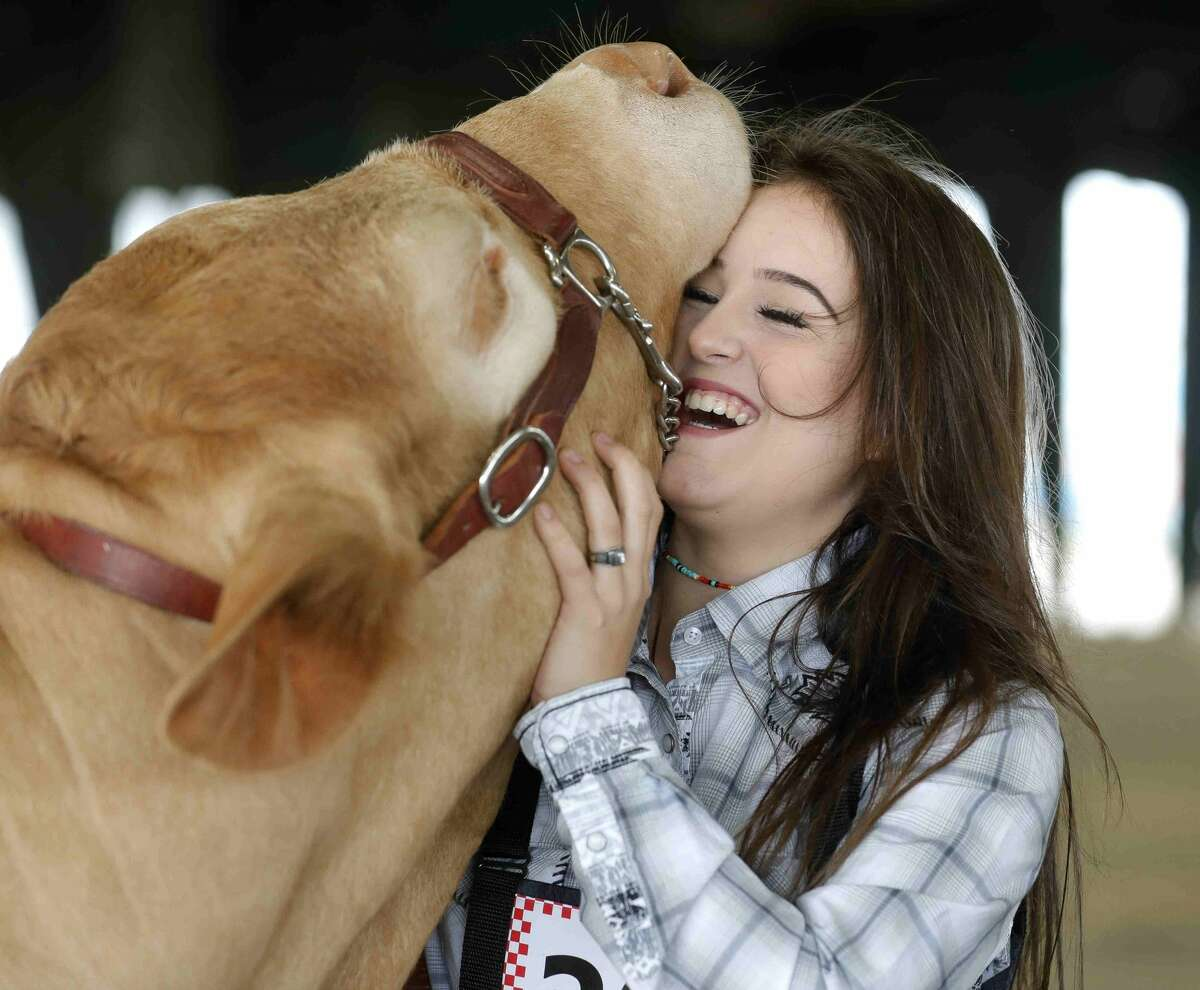 Kaidince King of Conroe High School FFA laughs as her heifer lifts her heads higher for King to scratch her neck before the replacement heifer show at the Montgomery County Fair & Rodeo, Thursday, April 15, 2021, in Conroe.