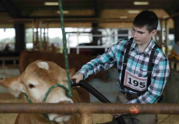 Noah Chamberlain of Montgomery Dobbin 4H blow dries his heifer, Carolina, before the replacement heifer show at the Montgomery County Fair & Rodeo, Thursday, April 15, 2021, in Conroe. Photo: Jason Fochtman/Staff Photographer / 2021 © Houston Chronicle