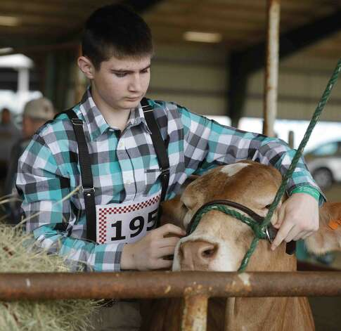 during the replacement heifer show at the Montgomery County Fair & Rodeo, Thursday, April 15, 2021, in Conroe. Photo: Jason Fochtman/Staff Photographer / 2021 © Houston Chronicle