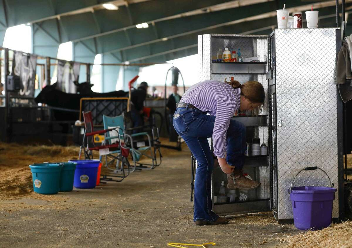 Zoe Romanchuk of Montgomery Dobbin 4-H puts on her boots before the replacement heifer show at the Montgomery County Fair & Rodeo, Thursday, April 15, 2021, in Conroe.