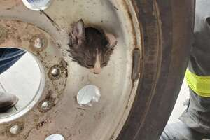 SAFD's Technical Rescue Team saved this kitten who got its head stuck in the lug hole of a wheel.