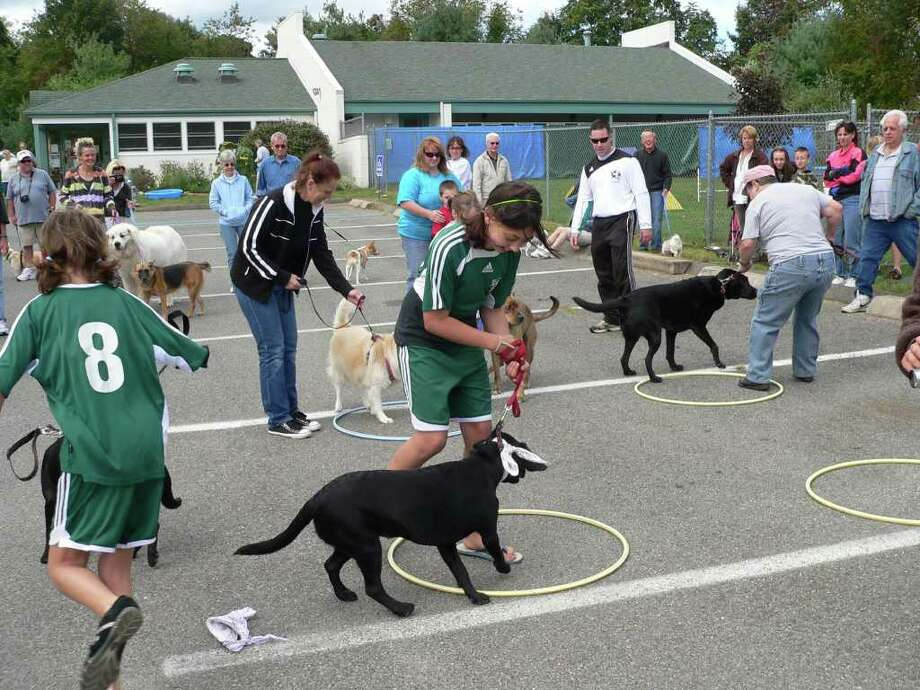The ninth annual Dog Days will be held at Animal Welfare, 8 Dodd Road, Saturday, Sept. 21 from 10 a.m. to 4 p.m. Photo: Contributed Photo / The News-Times Contributed