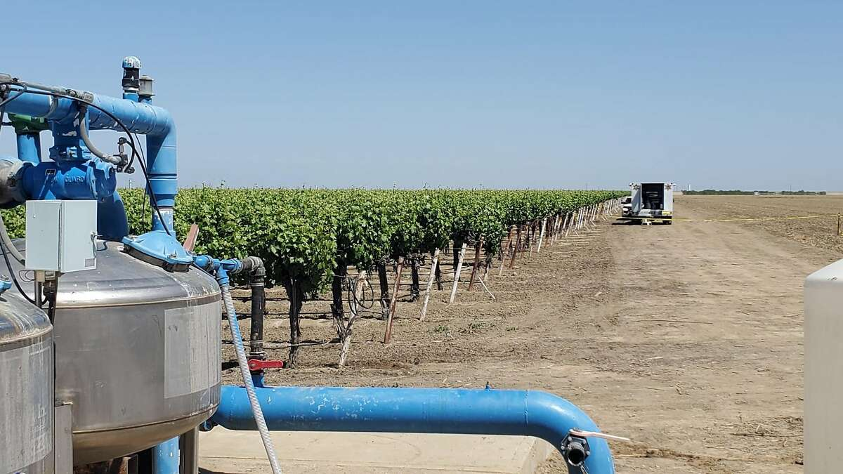 One farm worker was shot dead and two others were wounded at an undisclosed Fresno County vineyard, seen here, on April 16, 2021.
