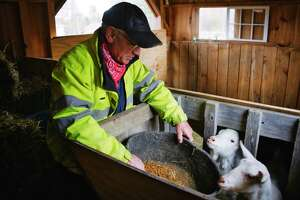 Farmer Mike Nally feeds two goats at his farm on Thursday, April 15, 2021, in Glenville, N.Y. Nally is also the president of the Schenectady County Farm Bureau.   (Paul Buckowski/Times Union)