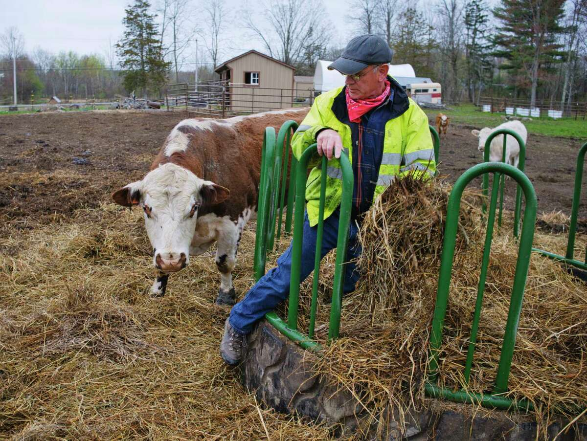 Farmer Mike Nally checks over the hay his cattle are feeding on at his farm on Thursday, April 15, 2021, in Glenville, N.Y. Hay prices have been increasing and a drought last hay season caused lower production of hay and now even finding hay to feed his cattle can be difficult Nally said. Nally is also the president of the Schenectady County Farm Bureau. (Paul Buckowski/Times Union)