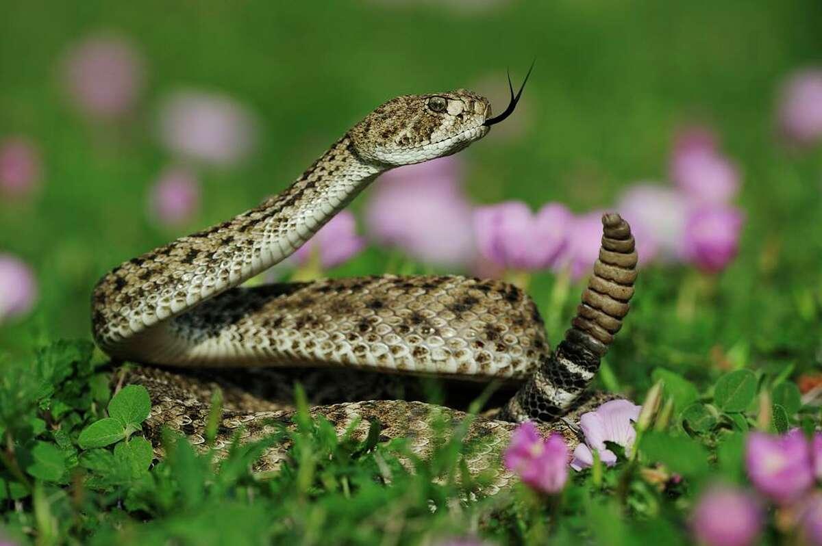 El avistamiento de serpientes puede ser más frecuente durante esta temporada debido al clima.