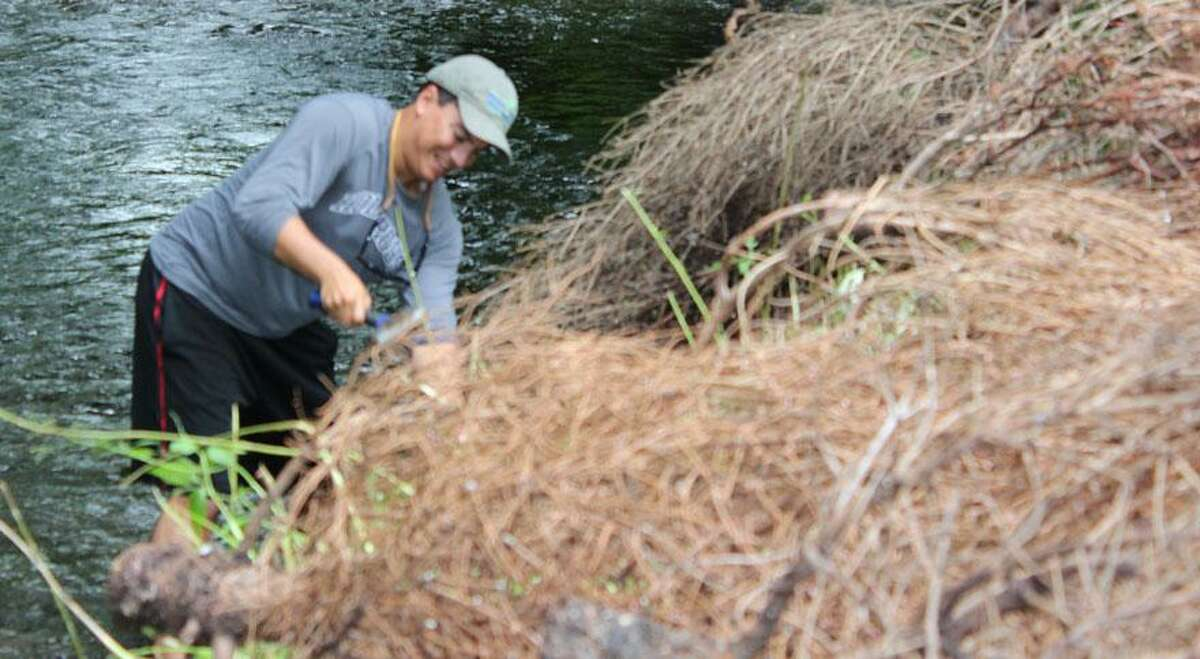 Volunteers from Trout Unlimited affix discarded Christmas trees to the banks and bed of the Mill River in an effort to restore its banks and natural flow in August of 2018. Work will resume Saturday, Sept. 14, on Congress Street in Fairfield, and help is needed.