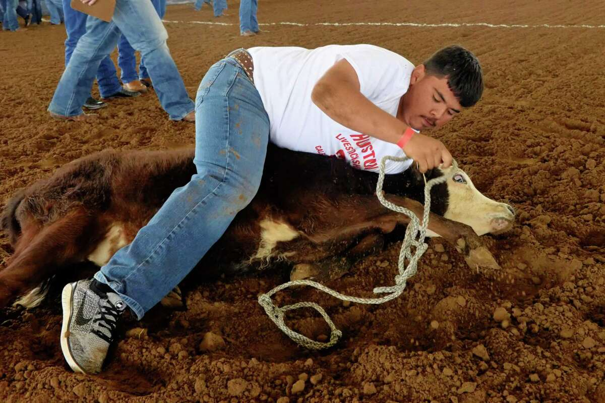 Dionicio Perez of the B. F. Terry FFA wrangles a calf during the 2021 Houston Livestock Show and Rodeo Calf Scramble at the Gerald D. Young Agricultural Sciences Center in Katy on Saturday, April 17.