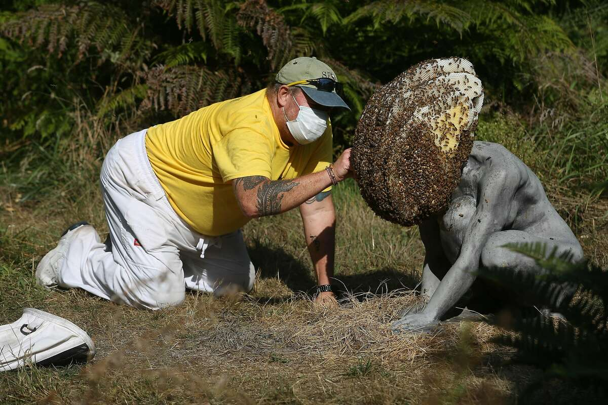 """Marc Johnson of the San Francisco Beekeepers Association board, checks to see the brood patterns on a hive in Pierre Huyghe's """"Exomind,"""" at the de Young Museum in September."""