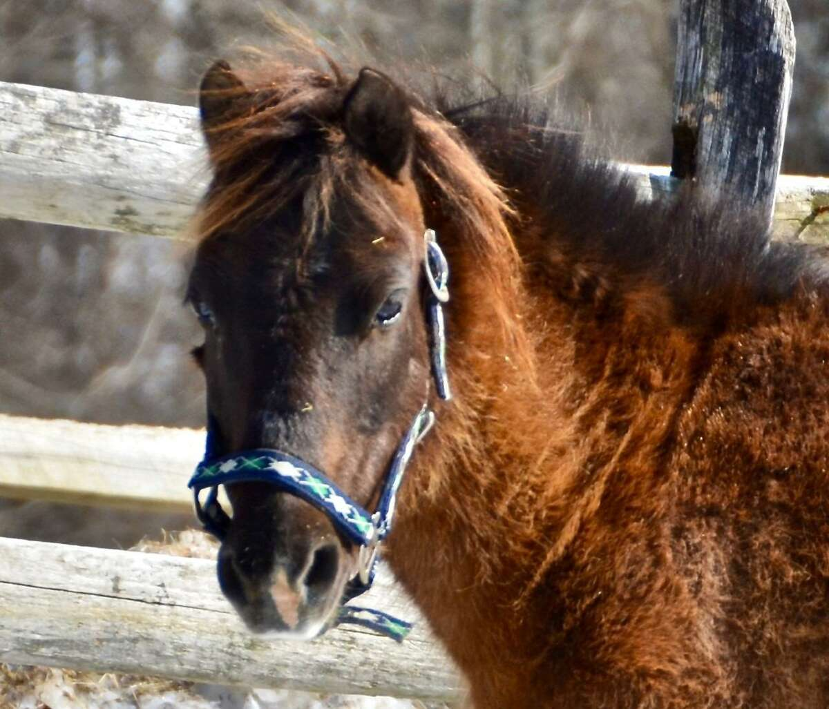 Riot is one of Horse of CT's rescue horses.