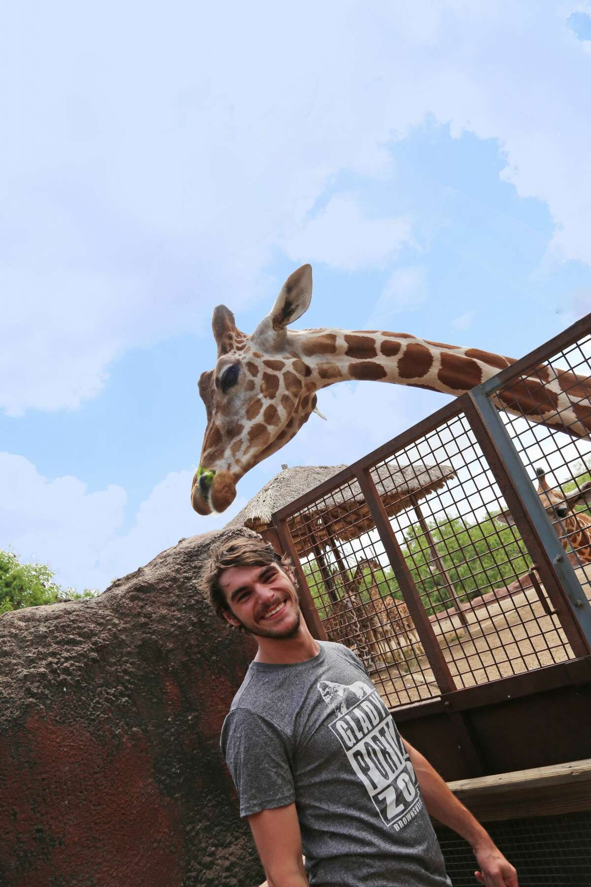 Giraffe Gladys Porter Zoo