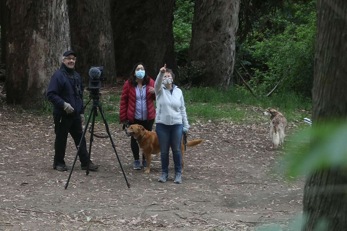 Mark Lipman (left), a Bay Area filmmaker, watches owls with Gerry Garner (right), in Glen Canyon Park in San Francisco. Lipman records the owls at sunrise or sunset, when they are most active.