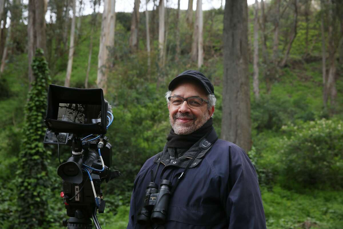 Bay Area filmmaker Mark Lipman has filmed a nesting owl and her owlets at Glen Canyon Park since February.