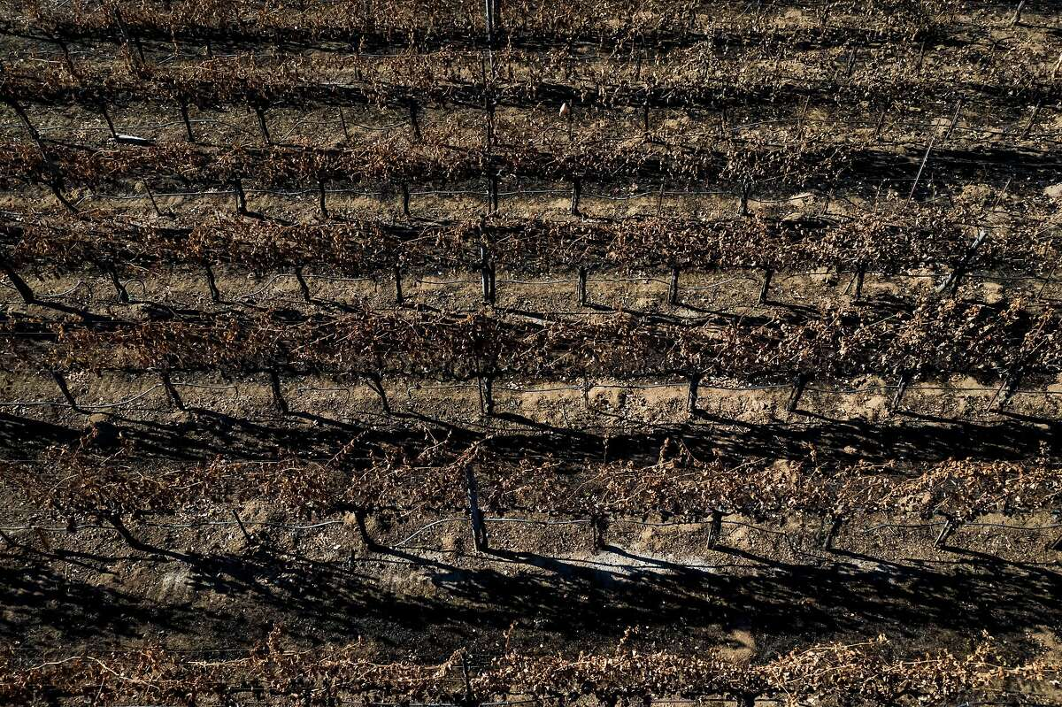 Burned grapevines along the Silverado Trail in Calistoga in October. Drought conditions can increase the likelihood of wildfires.