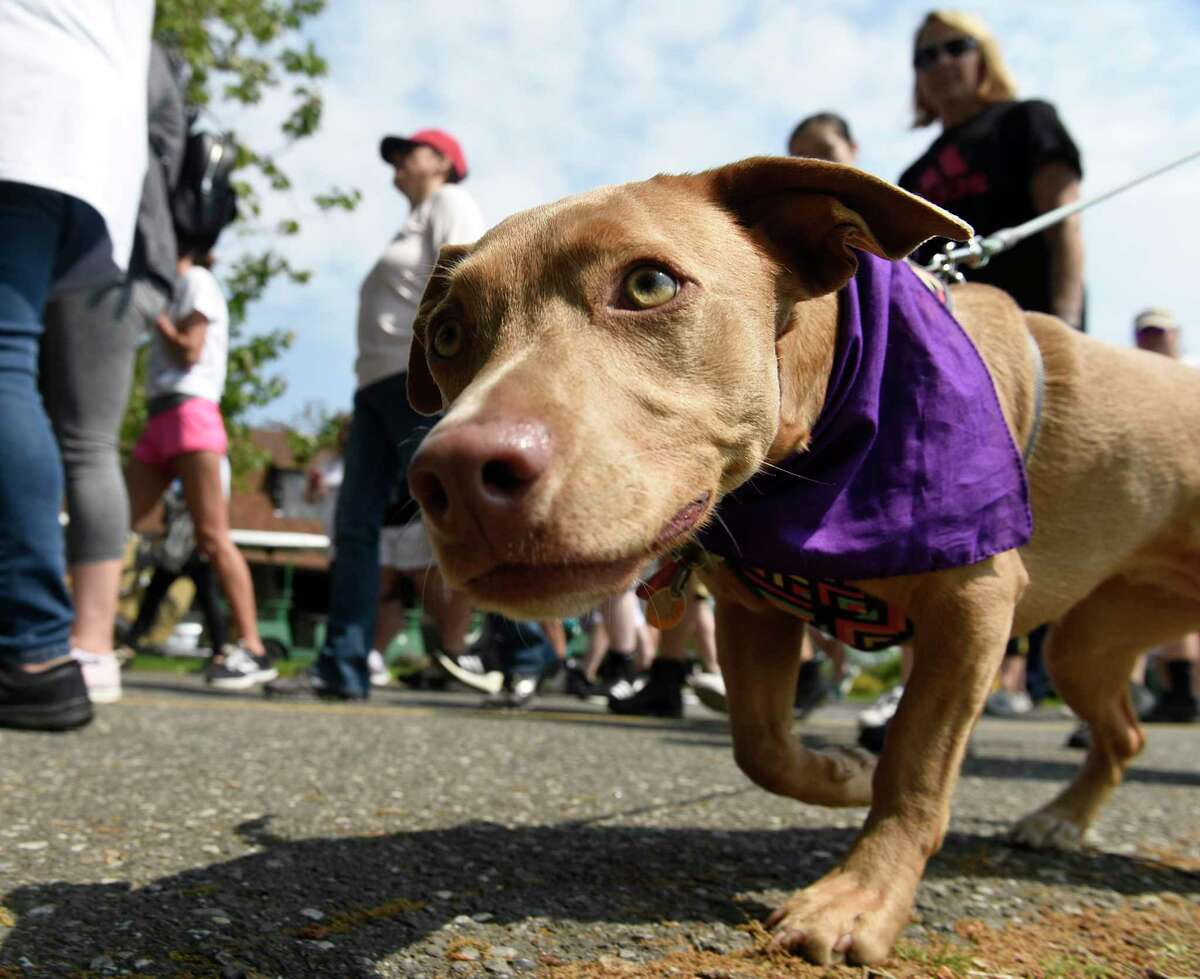 The annual National Walk to End Epilepsy will come to Middletown's Wadsworth Mansion May 9. In May 2019, about 200 walkers and 50 cyclists participated in event at Cove Island Park in Stamford.