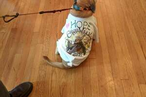 Meet Hope, the CROP Walk mascot will go on a walk help raise funds to feed the hungryink the Capital Region, and in refugee camps. Your dog already thinks you're a hero. Take your canine pal with you raise funds to feed the hungry here and overseas.