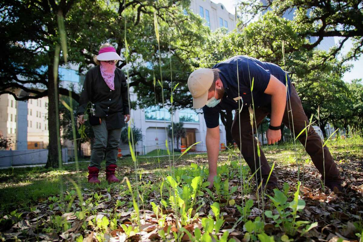 Hermann Park Conservancy director of volunteer programs Diane Kerr, left, and manager of volunteer programs Kyle Wolfe take a look at plants growing on an area reserved to test plants at Hermann Park, Tuesday, April 20, 2021, in Houston.