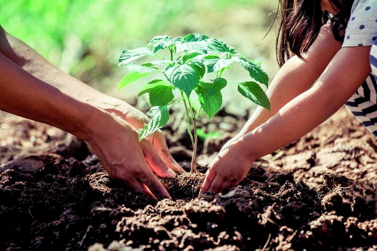 April 30, 2021 is Arbor Day, a day in which people around the world are encourage to plant a tree. (Pioneer file photo)