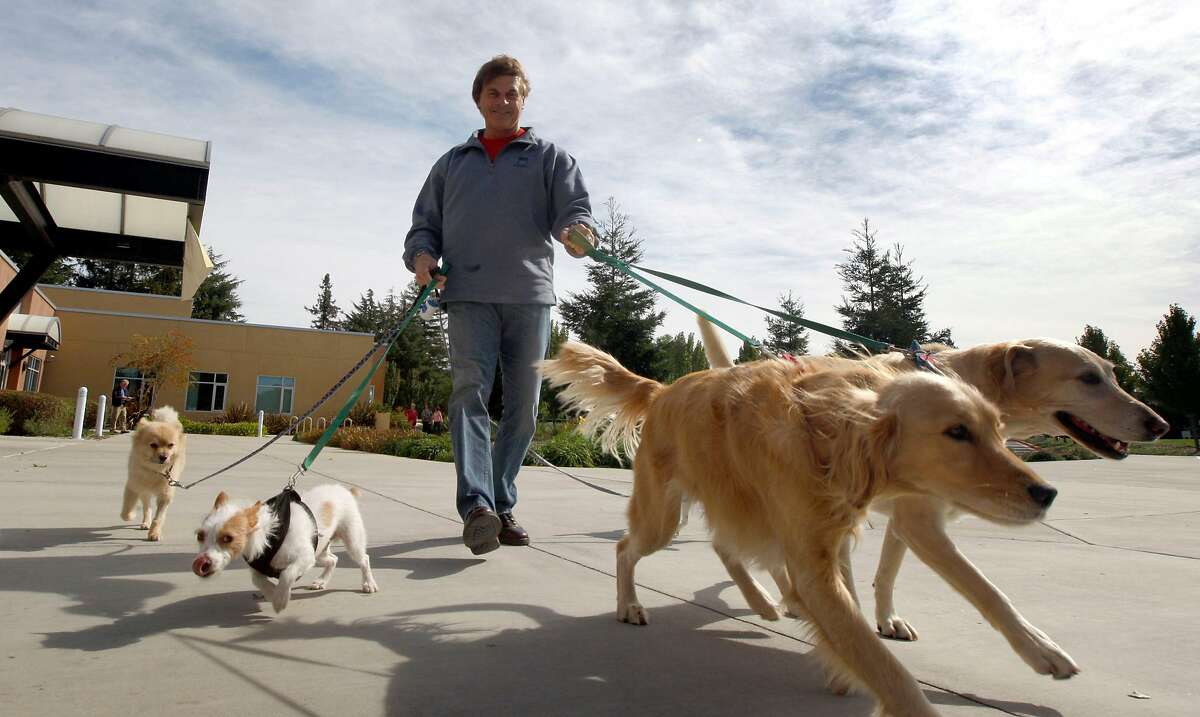 Long time Bay-Area resident and Major League baseball manager Tony La Russa, is the founder of Arf, an Animal Rescue Foundation located in Walnut Creek. During baseball's off-season La Russa aids the staff and volunteers by performing a number of tasks including walking the dogs up for adoption. Tuesday Oct. 27, 2009