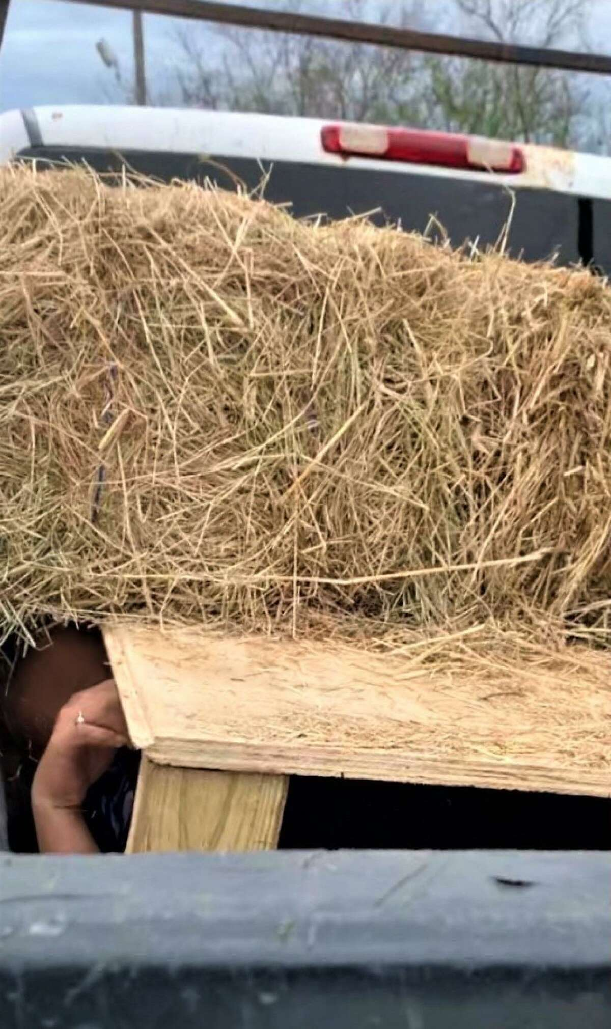 U.S. Border Patrol agents said they discovered five individuals inside this wooden compartment under a load of hay bales. Authorities said the people were immigrants who had crossed the border illegally.