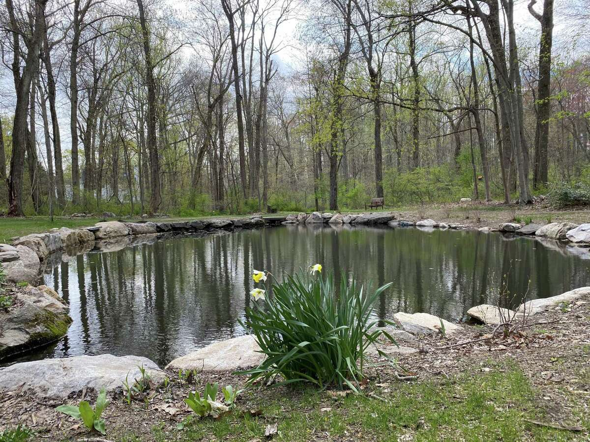 The pond was dredged and restored at Bristow Sanctuary and Wildwood Preserve, which abuts Mead Memorial Park in New Canaan. The picture was taken April 22.