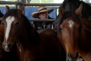 Burros and wild mustangs fill pens at Ford Park on the opening day of the Bureau of Land Management's horse and burro sale. Photo made Friday, April 23, 2021 Kim Brent/The Enterprise