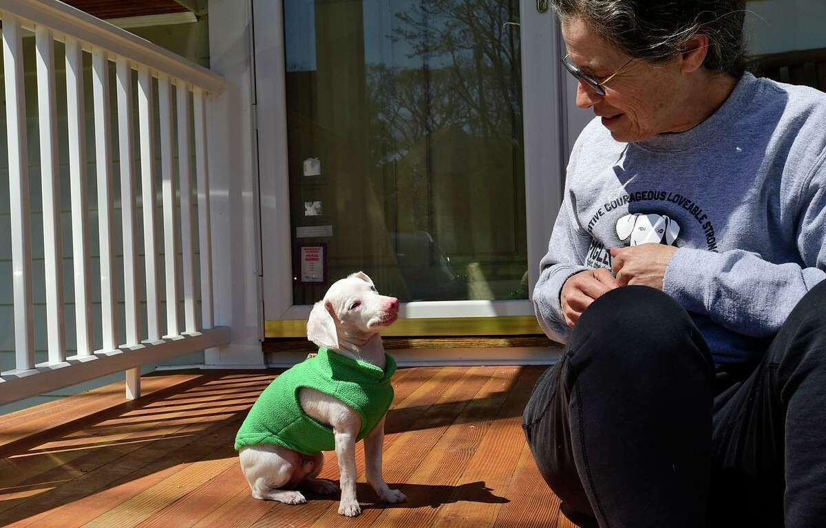 Veterinarian Melissa Shapiro and her dog Piglet at their home on Friday in Westport. Shapiro adopted Piglet, a deaf, blind and pink dog, in 2017. She created an Instagram account for him and uses it spread kindness to more than 220,000 followers. The duo now have a book coming out this summer.