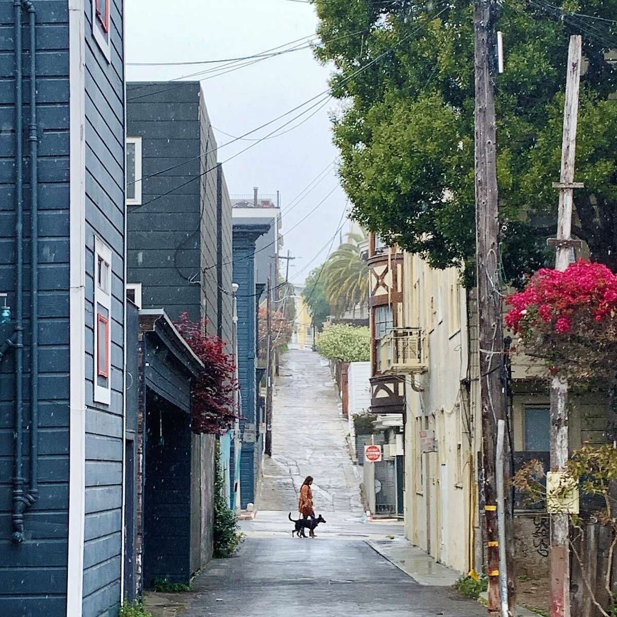 A person and dog walk in light rain in San Francisco's Mission District on Sunday.