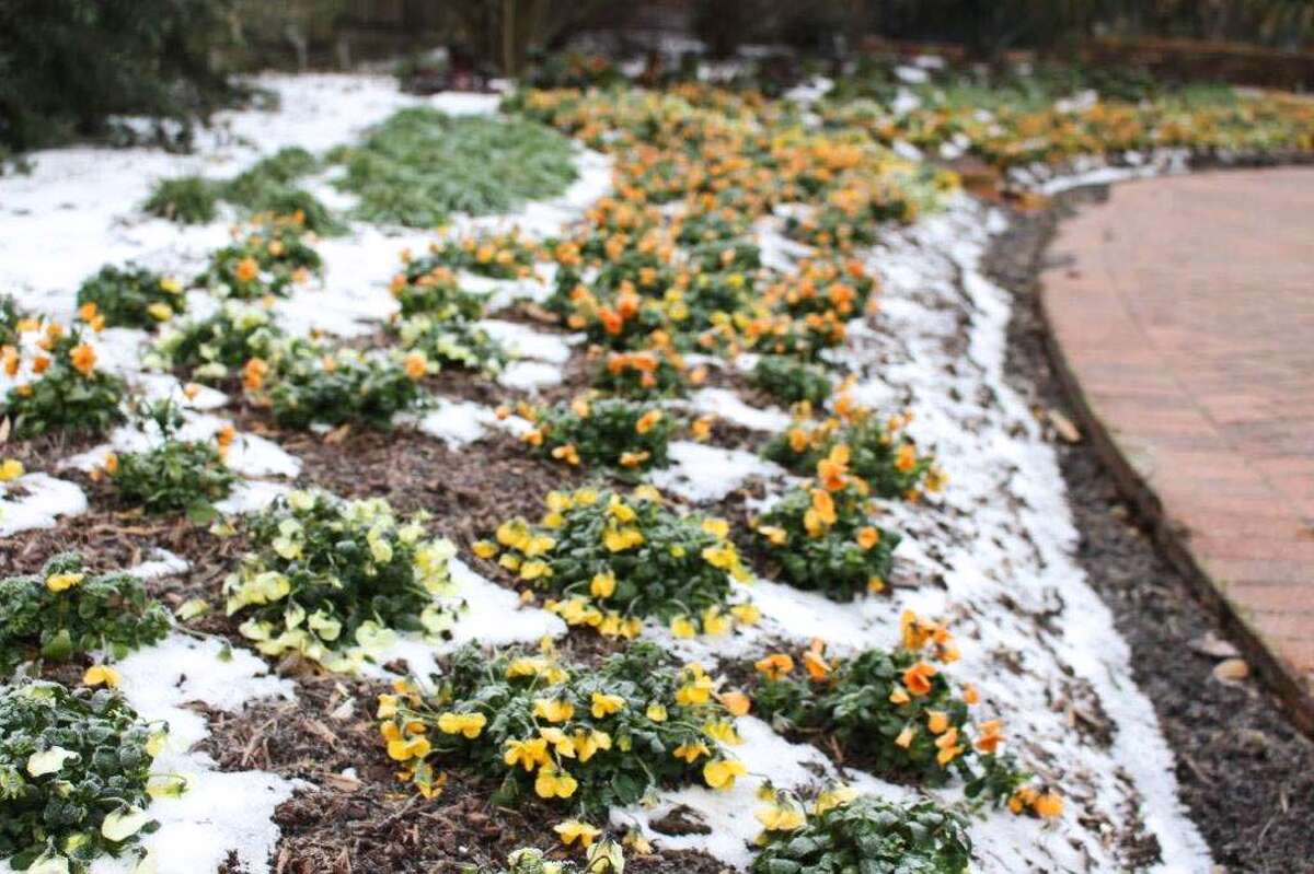 Plants at Mercer Botanic Gardens peak out from the snow.