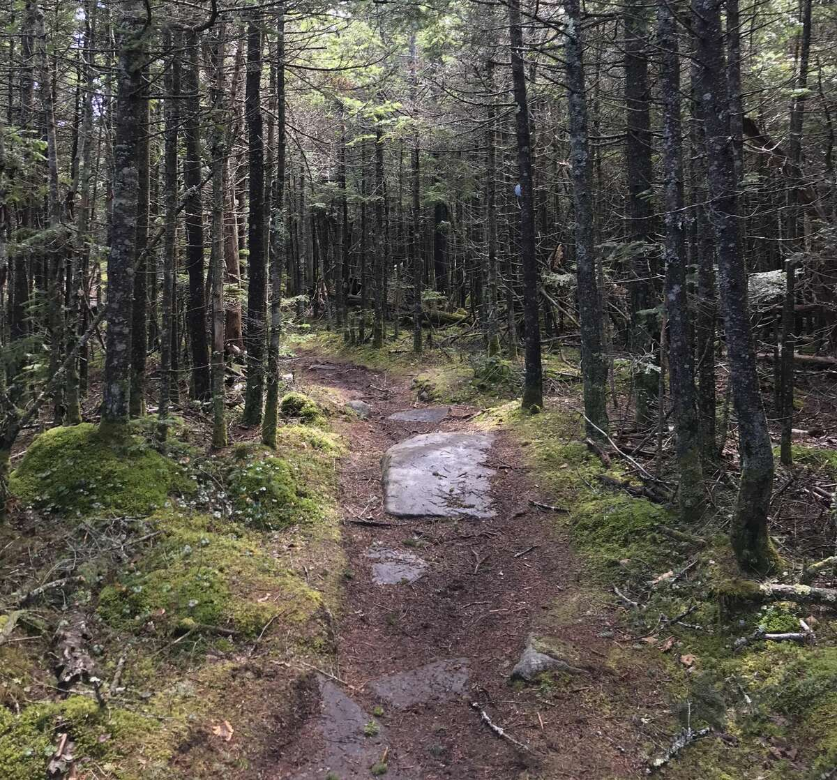 A herd path on Panther Mountain in the Catskills. Herd paths are created when hikers stray off-trail, leading to the destruction of plant life.