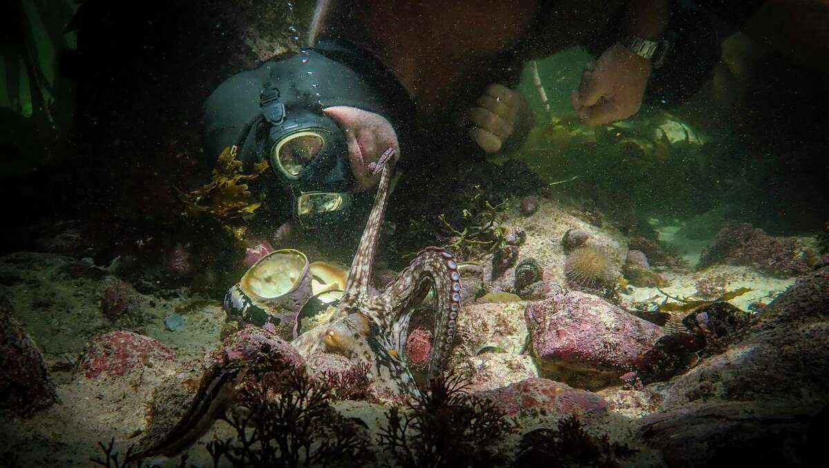 """My Octopus Teacher"" wins the Oscar for Best Documentary Film. (Netflix/TNS)"