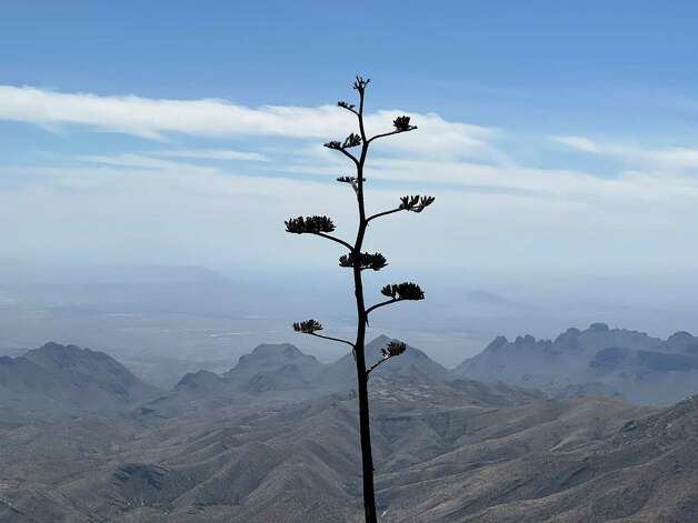 The South Rim Trail in Big Bend National Park. Photo: Melissa Aguilar/Houston Chronicle