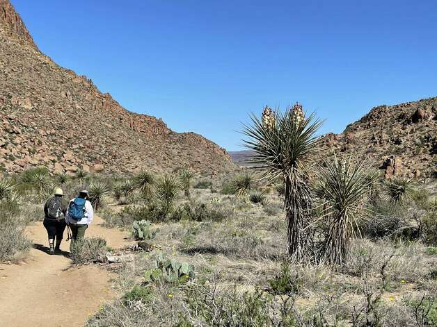 Grapevine Hills Trail in Big Bend National Park. Photo: Melissa Aguilar/Houston Chronicle