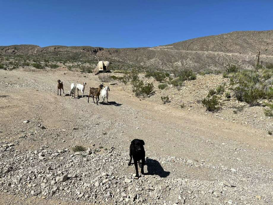 Far Flung Outdoor Center in Terlingua offers Jeep tours of Big Bend Ranch State Park. Guide Randy De La Fuenta takes guests to the abandoned Buena Suerte mine, once a source of cinnabar ore that was refined at the site into mercury. Goats and dogs chase the Jeep along the dirt road. Photo: Melissa Aguilar/Houston Chronicle