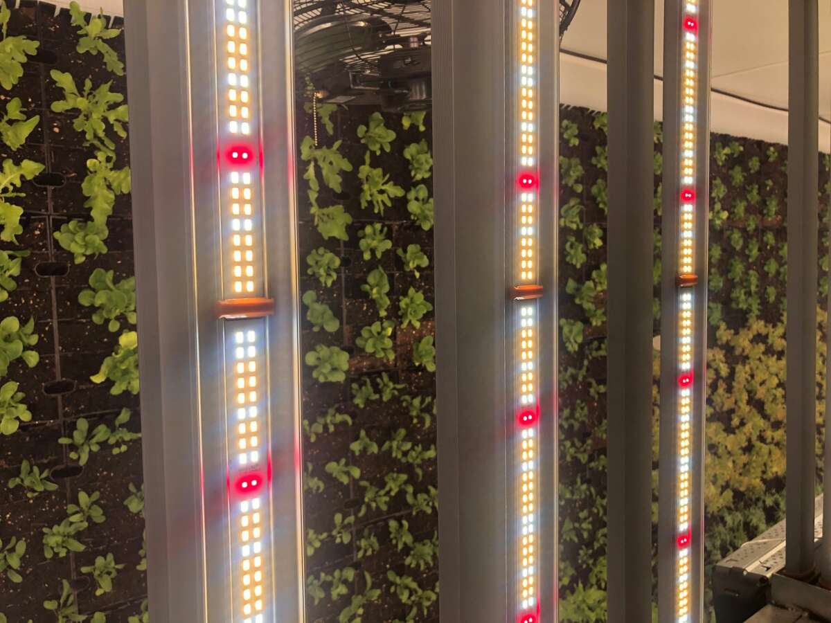 Shipping container farming is climate-controlled, powered by LED lights instead of the sun and can produce high yield in a small space. But humidity and start-up infrastructure costs can be challenges.