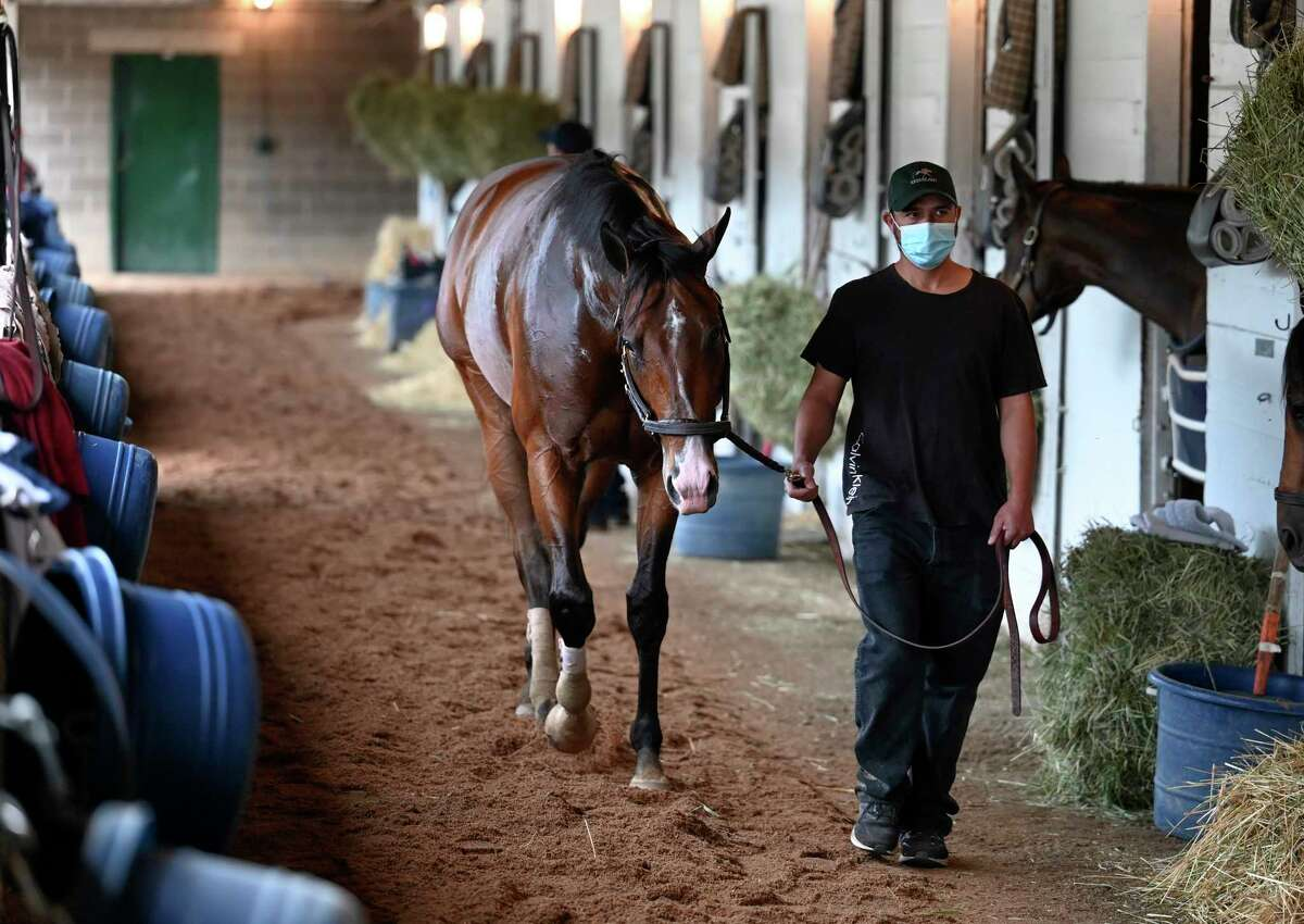 Kentucky Derby participant Highly Motivated cools out after his morning exercise at Churchill Downs Wednesday April 28, 2021 in Louisville, Kentucky. Photo Special to the Times Union by Skip Dickstein
