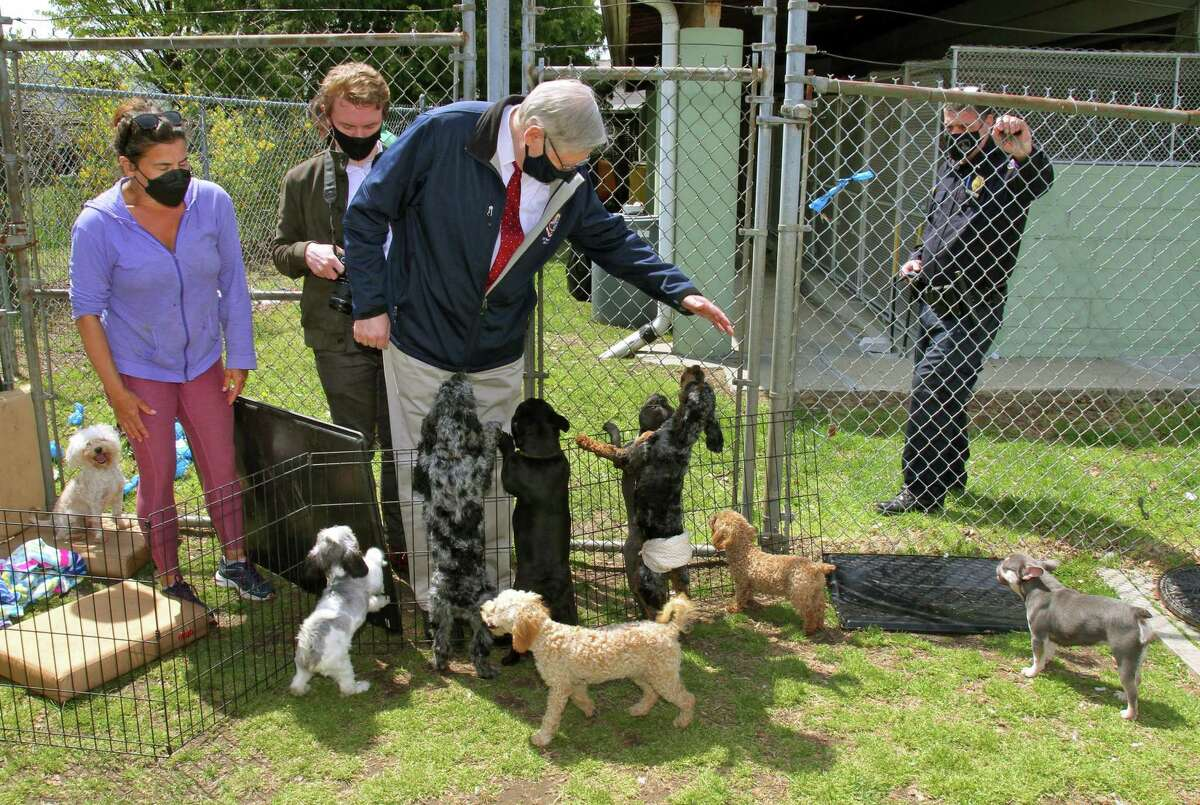 Stamford Mayor David R. Martin with recently rescued dogs at Stamford Animal Shelter in Stamford, Conn., on Wednesday April 28, 2021. These dogs were rescued from an illegal puppy mill.