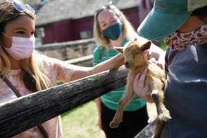 Hamden's Ally Ciociola, left, and Shelton's Devan Kingston, center, pet a baby goat, Cinnabon, held by Heckscher Farm Manager Victoria Jaffrey at the Stamford Museum & Nature's Heckscher Farm in Stamford, Conn. Tuesday, April 27, 2021. Heckscher Farm recently welcomed seven baby goats born from three mothers to the farm - Biscuit, Cinnabun, French Toast, Waffles, Poptart, Mocha, and Macchiato.