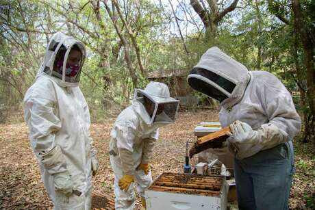 1Beekeepers Lane Walla, Loren Rodriguez, and Nicole Buergers work an apiary during the spring, Monday, March 29, 2021, in Seabrook. After inspecting the beehive, the beekeepers decided to split the hive.