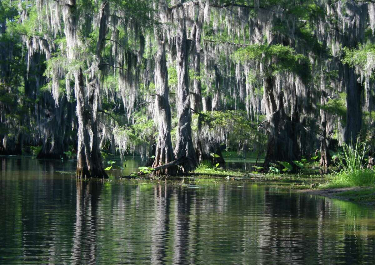 The largest lake in the South at more than 26,000 acres, Caddo is a shallow, primeval maze of cypress swamp swagged in Spanish moss.