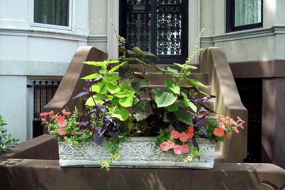 This undated image provided by Brooklyn Botanic Garden shows a window box entry in the Greenest Block in Brooklyn contest. (Brooklyn Botanic Garden via AP)
