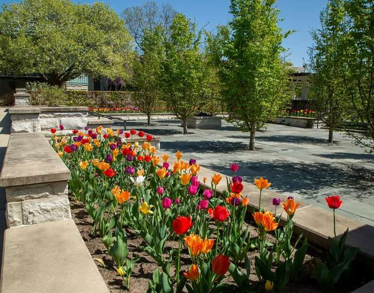 Lewis and Clark Community College is inviting volunteers to help pull up tulips at the Godfrey campus 8 a.m. to 4:30 p.m. Monday, May 3, and Tuesday, May 4. Participants may take home the bulbs if they wish; bulbs not removed by volunteers will be placed outside the greenhouse.