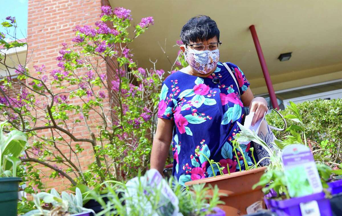 Gita Rajan, of Fairfield, looks over the selection at The Bigelow Center for Senior Activities' first-ever plant exchange on Friday, April 30, 2021, in Fairfield, Conn.