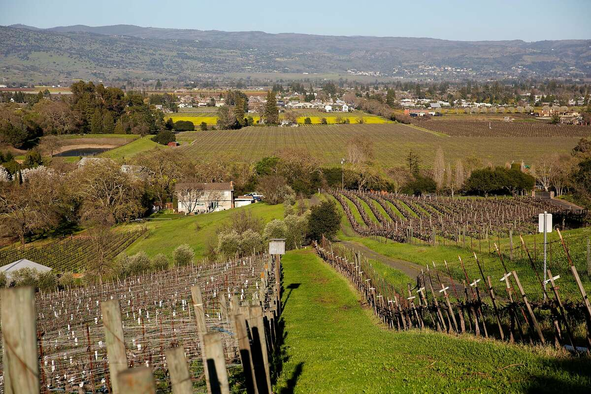 Napa County may face elevated fire conditions on Sunday, the Bay Area office of the National Weather Service reported. Here, the Napa Valley is visible beyond rows of grape vines at the top of the Matthiasson Winery property in Napa, Calif. on Saturday, March 13, 2021.