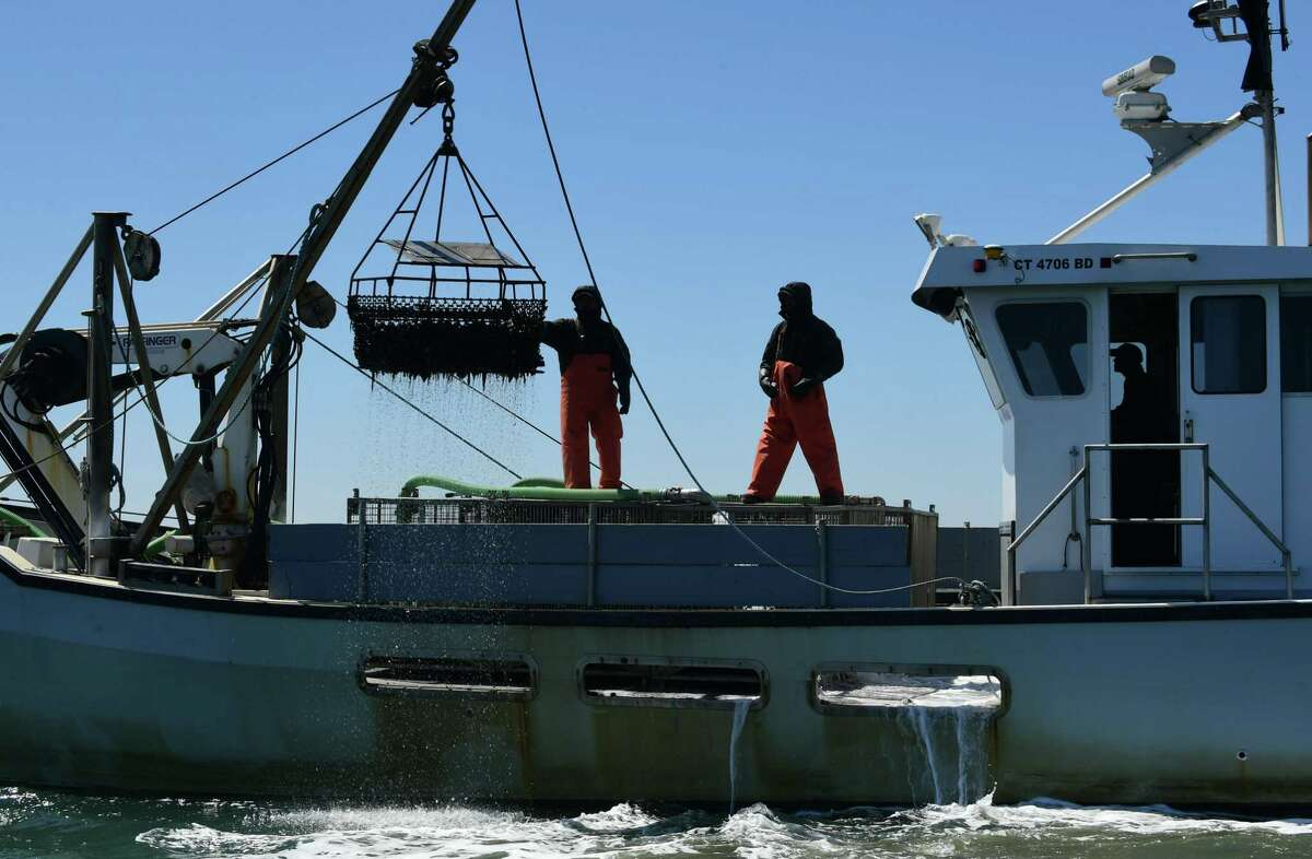 Workers with Copps Island Oysters in May 2020 in Norwalk, Conn.