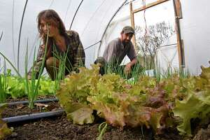Ben Stein and his wife Alicia Brown tend to vegetables in one of their greenhouses to get ready for the CSA season at their Edible Uprising Farm on Friday, April 30, 2021 in Troy, N.Y. (Lori Van Buren/Times Union)