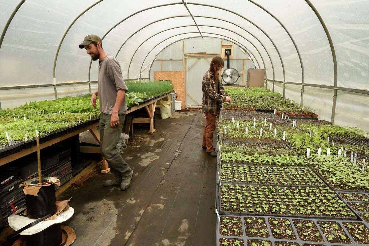 Ben Stein and his wife Alicia Brown work in one of their greenhouses to get ready for the CSA season at their Edible Uprising Farm in Troy.(Lori Van Buren/Times Union)