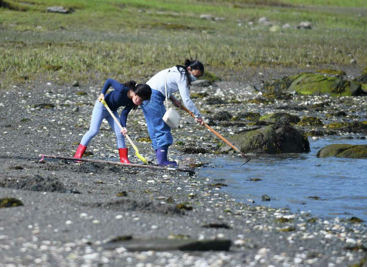 Old Greenwich's Miwa Kawamura and her daughter Kokoro Kawamura, 8, dig for shellfish during a demonstration at the Greenwich Point Park beach on Sunday. The Greenwich Shellfish Commission hosted an informative and interactive event for both children and adults interested in fishing for clams, oysters, and mussels. Also, a potential tax break for Connecticut's shellfishermen sailed through the state Senate last week. For more, see A3.