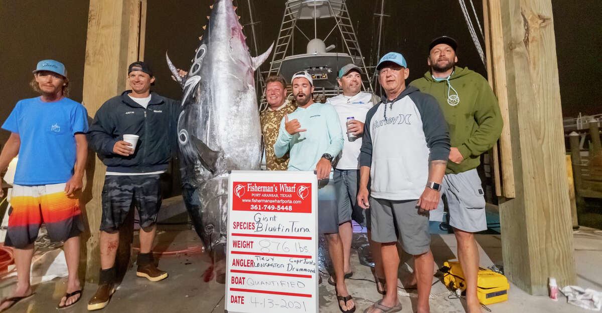A photo of the Texas state record bluefin tuna caught by Troy Lancaster on Quantified in April.